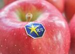 国産りんご特集(お届け時期別) 濃厚な味と香りにびっくり!