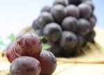 国産ぶどう(葡萄)特集 濃厚な甘みと豊富な果汁が美味しい