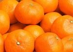 国産みかん(蜜柑)特集(品種別・和歌山産 田村みかん)ビタミンCたっぷりの冬フルーツ