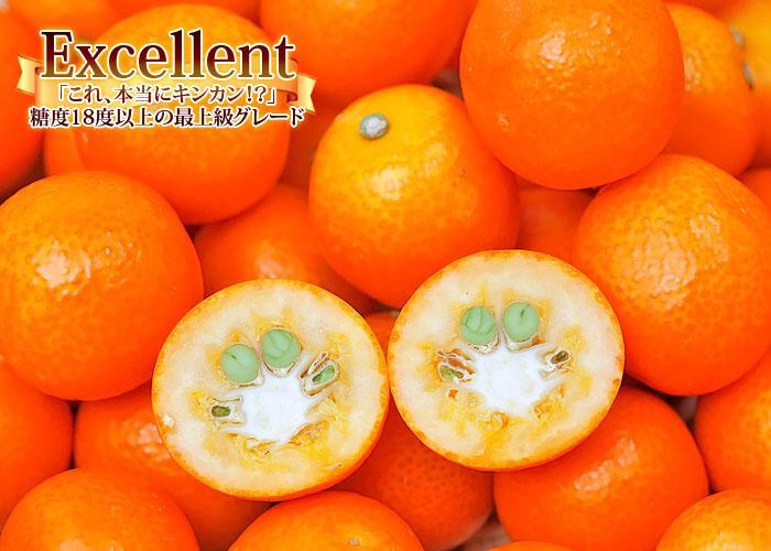完熟 金柑 きんかん たまたま エクセレント 宮崎県産 きんかん 2L~3L ...