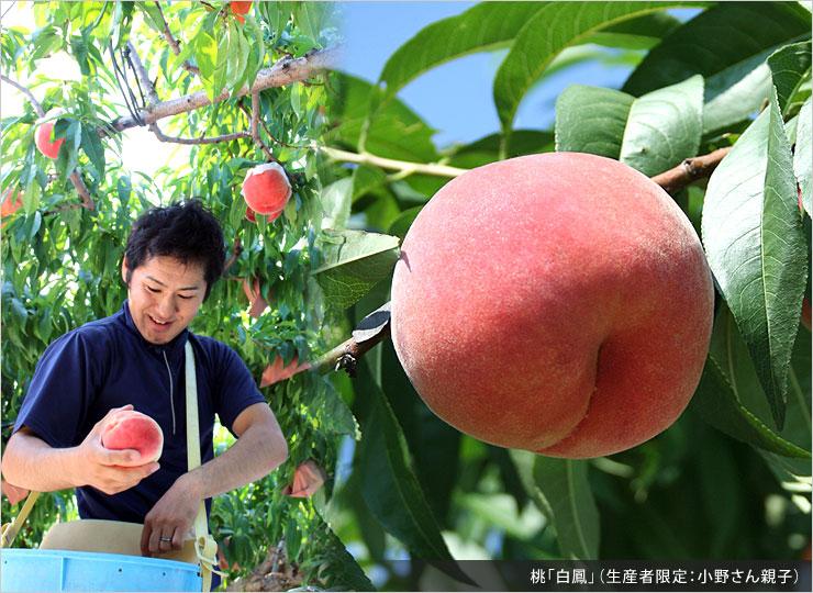 小野さん親子の桃