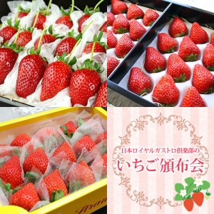 hnp03-berry1