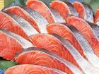 サケ(鮭)